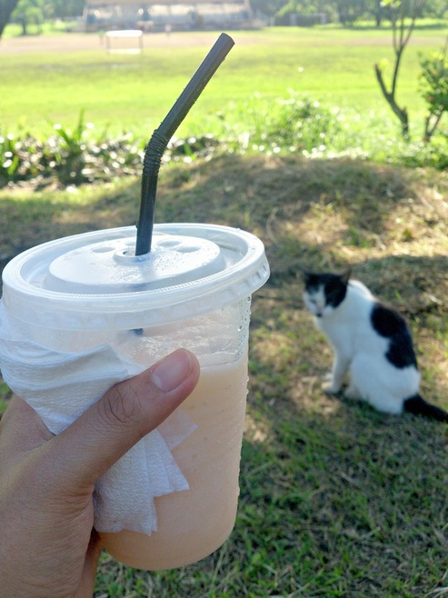 Lutong Bahay Fruit Shake - Trialaland UP Diliman Food Trip & Walking Tour